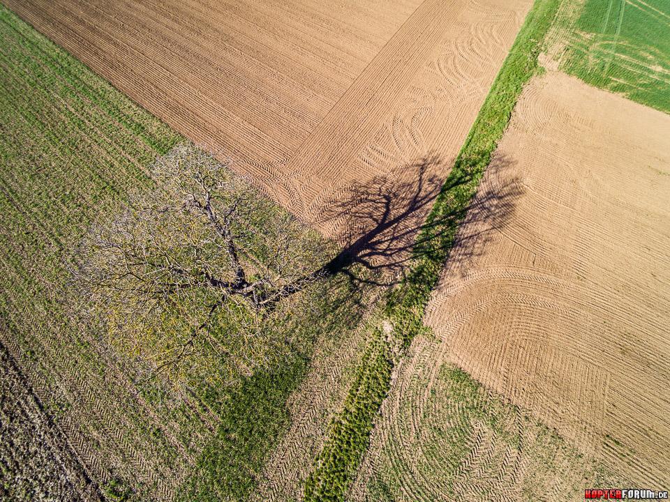 Im Schatten des Baumes